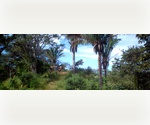 Prime Coastal Costa Rican Real Estate For Sale